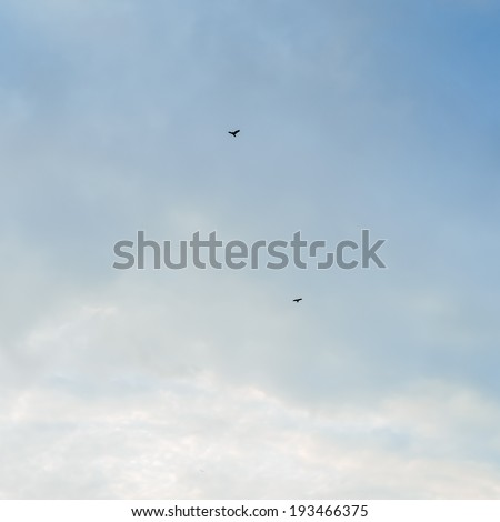 birds flying on the background of the cloudy blue sky