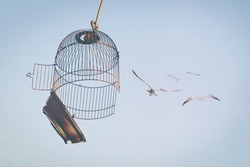 Birds flying out of cage to the blue sky.  The concept of lifting restrictions. Defocused photo with soft focus.
