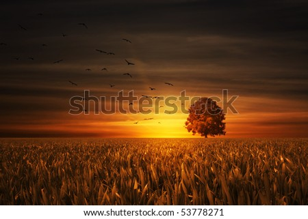birds flying to the tree with nice sundown in back