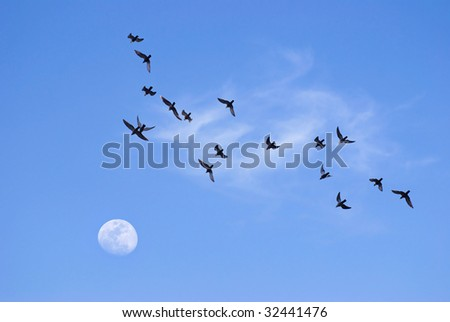 Birds flying toward the moon in the evening
