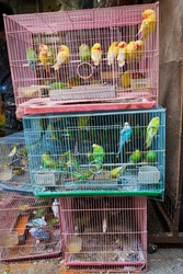 Birds for sale in bird market