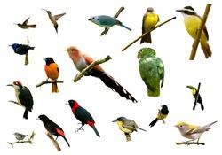 birds from Costa Rica