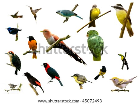 birds from Costa Rica