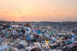 Birds gulls fly over a landfill in Europe, like over a huge sea of garbage in search of food. Waste lies thickly up to the forest, attracting birds and rodents
