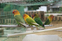 birds in a shared cage