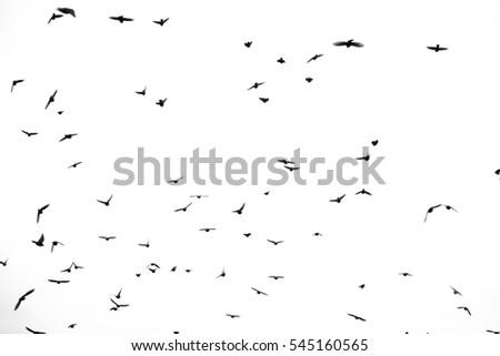 Birds in a sky #545160565