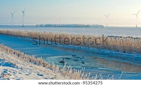 Birds in an ice hole along a dam