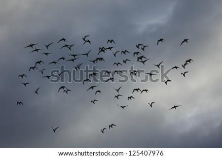 Birds in Antarctica