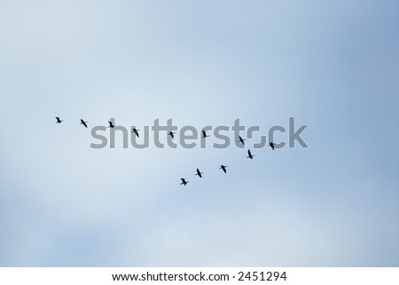 "birds in classic ""V"" formation"