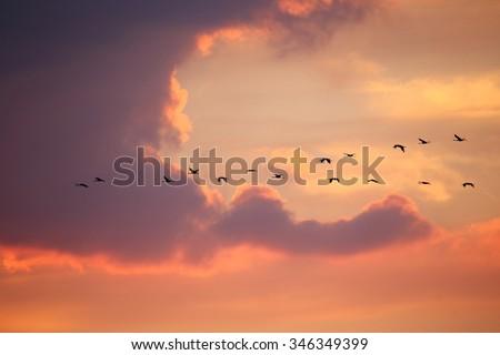 Birds in flight at sunset background #346349399