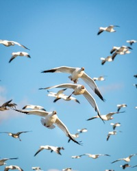 Birds in flight during the day.
