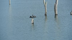 birds in Periyar Wildlife sanctuary at Thekkady. Tourist places in Idukki Kerala. Rivers and backwaters in India