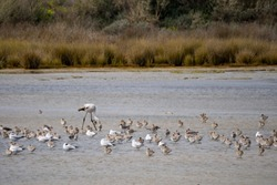 Birds in Ria Formosa national park, Algarve, Porugal