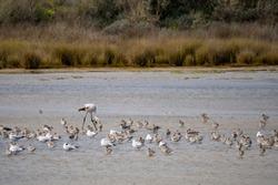 Birds in Ria Formosa national park, Algarve, Porugal