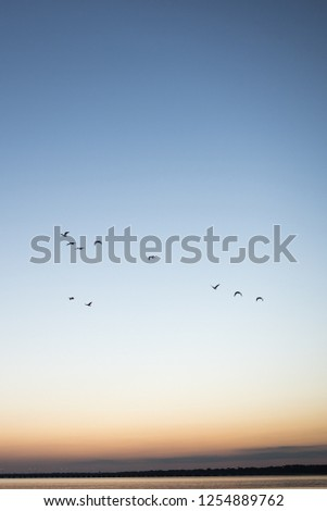 birds in sunrise #1254889762