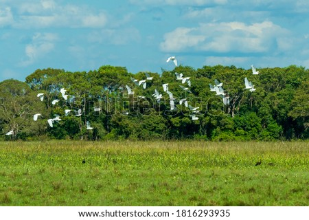 Photo of  Birds in the Mato Grosso wetland, Pocone, Mato Grosso, Brazil on June 14, 2015.