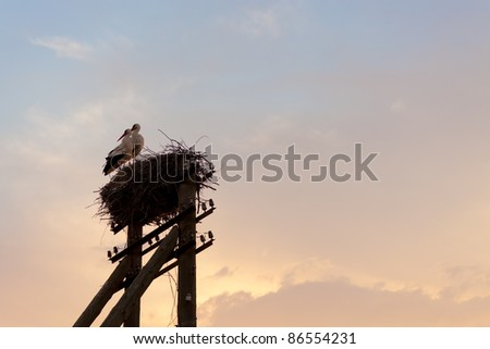 birds in the nest against a stormy sky