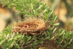 Birds in the nest, waiting for feed.