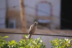 Birds in the winter of Khartoum Sudan