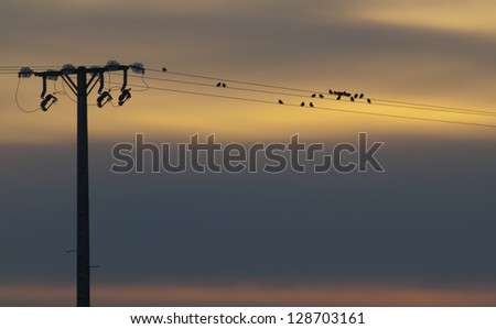 Birds in the wire