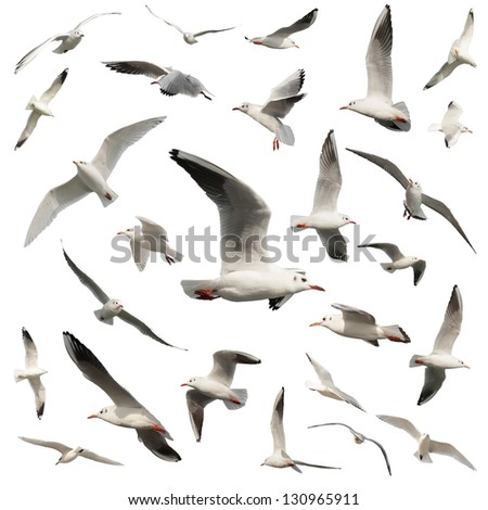 birds isolated on white