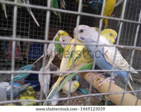 birds love and birds groups pics  #1469123039