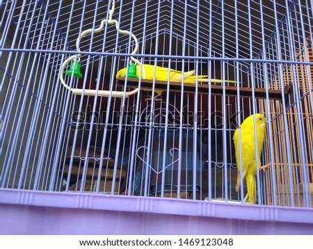 birds love and birds groups pics  #1469123048