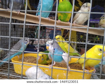 birds love and birds groups pics  #1469123051