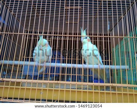 birds love and birds groups pics  #1469123054