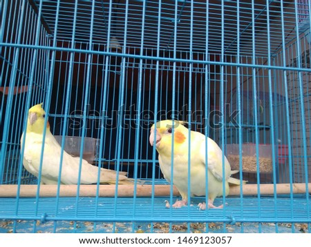 birds love and birds groups pics  #1469123057
