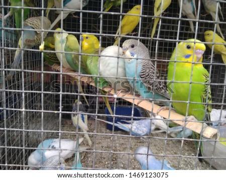 birds love and birds groups pics