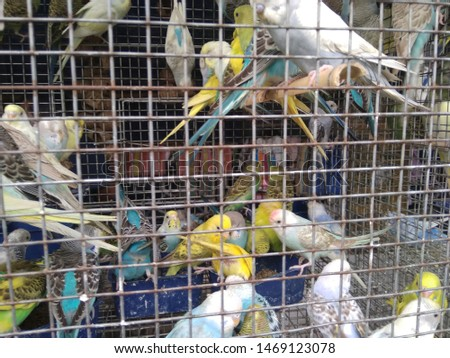 birds love and birds groups pics  #1469123078
