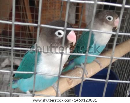 birds love and birds groups pics  #1469123081