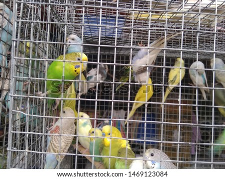 birds love and birds groups pics  #1469123084