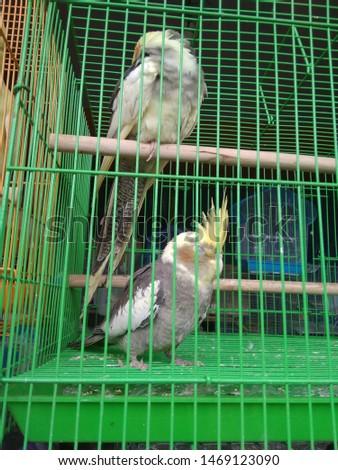 birds love and birds groups pics  #1469123090