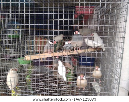 birds love and birds groups pics  #1469123093