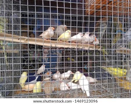 birds love and birds groups pics  #1469123096