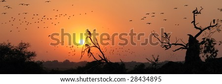 Birds migration during a red sunset