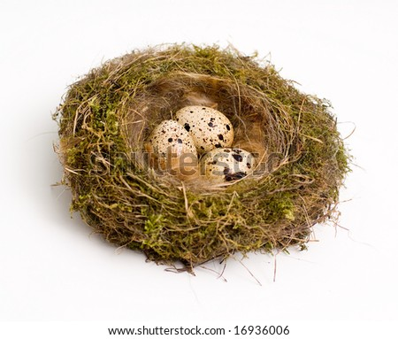 Birds nest with eggs at white background