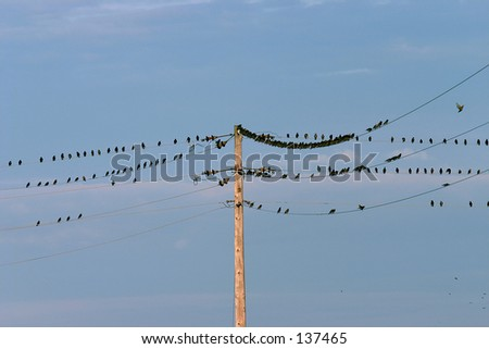 Birds of a Feather on a Wire