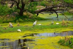 Birds of keoladev bird sanctuary