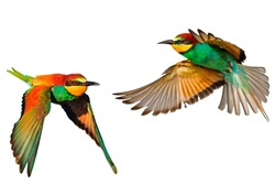 birds of paradise feathers isolated on white background