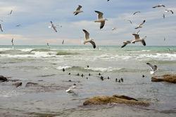 Birds of the sea. Caspian Sea. Mangistau region. Kazakhstan.