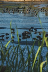 Birds on a Estuary seen from behind the grass