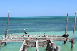 Birds on a peer in Sian Kaan