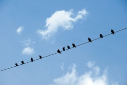 Birds on a wire against blue sky with clouds