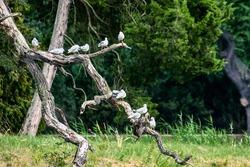 Birds on broken branch with forest background
