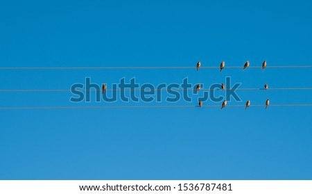 Birds on elecricity wires against blue sky. One bird outside the group with empty space. Concept of job vacancy.