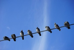 Birds on electric cable in the city