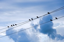 Birds on electric wires, blue cloudy sky in the background